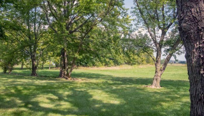 Backyard Property